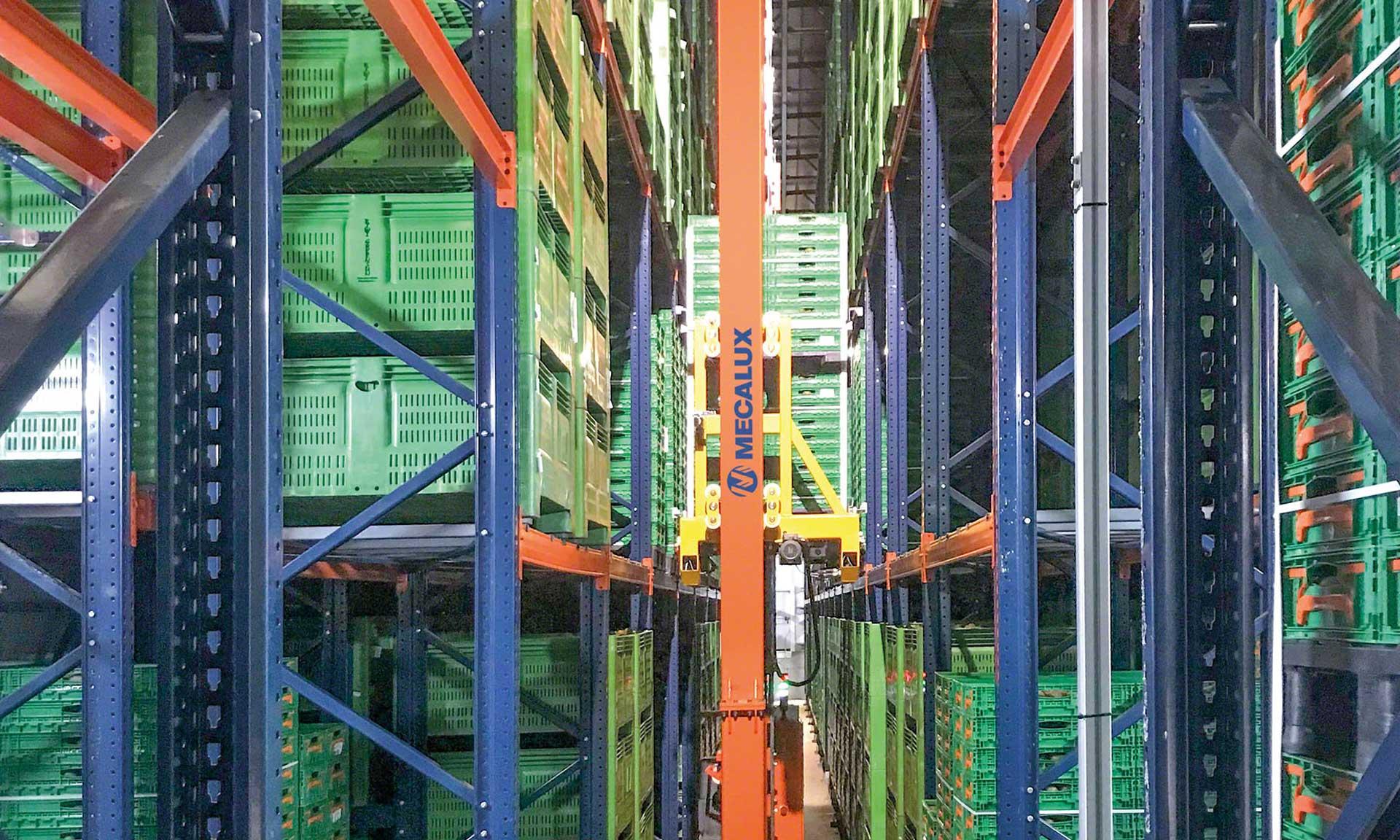 Kiwi Greensun : le point de maturation parfait pour un entrepôt réfrigéré